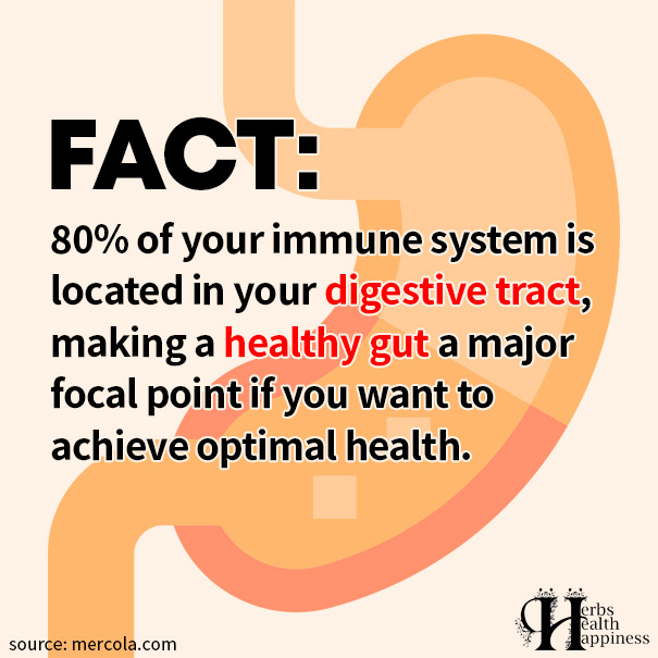 80% Of Your Immune System Is Located In Your Digestive Tract