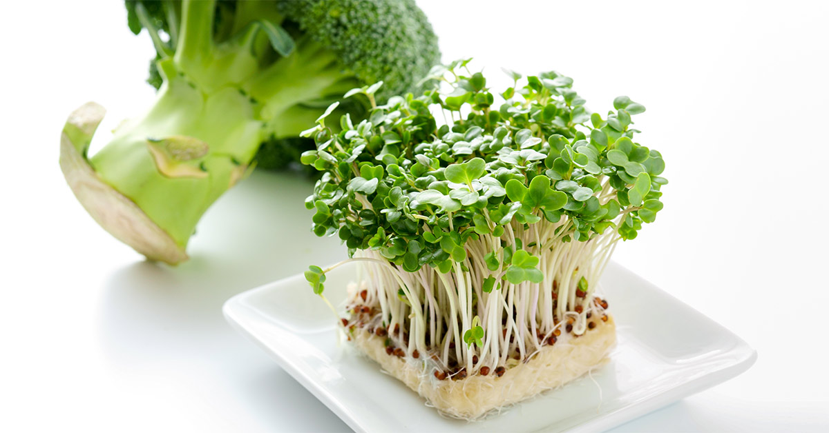 Broccoli Sprout Extract Found By USA Study To Control Blood Sugar Levels