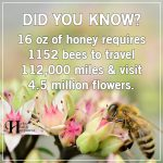 16 oz Of Honey Requires 1152 Bees To Travel 112,000 Miles