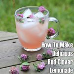 How To Make Delicious Red Clover Lemonade