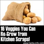 16 Veggies You Can Re-Grow From Kitchen Scraps