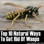 Top 10 Natural Ways To Get Rid Of Wasps