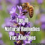 Top Ten Natural Remedies For Allergies