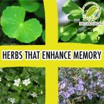 5 Herbs That Improve Memory