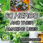 60 Herbs And Their Amazing Uses
