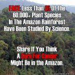 The Amazon Rainforest: Could It Contain Cures For Cancer?