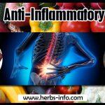 7 Best Anti-Inflammatory Foods