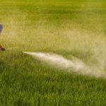 Fears As 93% Of Americans Tested Positive For Glyphosate And Children Found To Have The Highest Levels