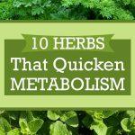 10 Herbs That Quicken Metabolism