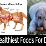 31 Healthiest Foods For Dogs