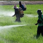 New U.N. Report Estimates Pesticides Kill 200,000 People Per Year