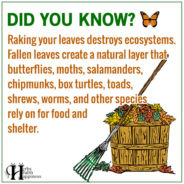 Raking Your Leaves Destroys Ecosystems