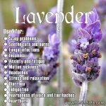 ★ Amazing Health Benefits Of Lavender ★