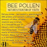 Bee Pollen – Nature's Fountain Of Youth