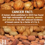 Scientific Study Finds Incidence Of Breast Cancer Reduced By High Consumption Of Walnuts, Pecans And Almonds