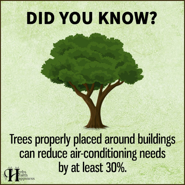 Trees-Properly-Placed-Around-Buildings
