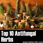 10 Antifungal Herbs