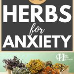 10 Herbs For Anxiety