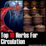 10 Herbs For Circulation