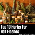 10  Herbs For Hot Flashes