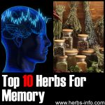 Herbs for Memory