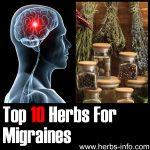10 Herbs For Migraines