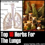 10 Herbs For The Lungs