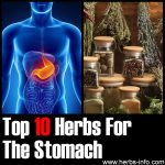 10 Herbs For The Stomach