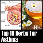 10 Herbs For Asthma