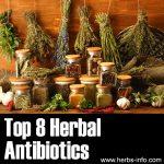 8 Herbal Antibiotics